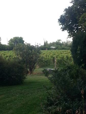 The Vineyard Bed & Breakfast