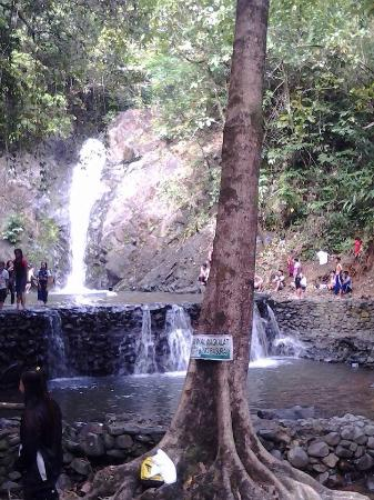 Lanuza, Philippines: Magkawas fall and green paradise is a 18mtrs. falls full of green vegetation and full of species