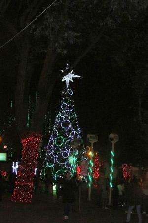 Parque de Usaquen  colore noche y magia 6baf0212d5b