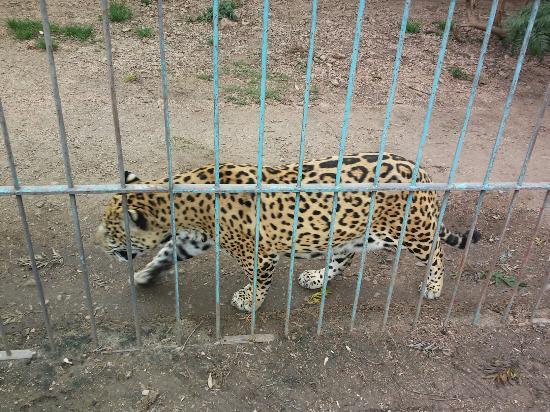 Durazno, أوروجواي: Zoológico Washington Rodriguez Piquinela