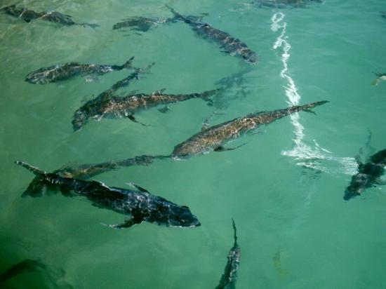 Lots of fish to see foto di parco xel ha solidaridad for Koi pond traduzione