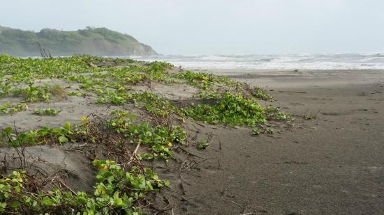 Villa Morjim: Beautiful Morjim beach during Monsoon