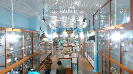 ‪Shembaganur Museum of Natural History‬