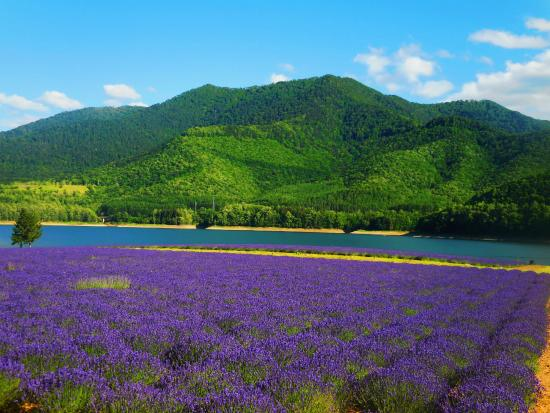 Lake Kanayama Forest Park