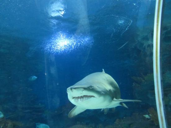photo0.jpg - Picture of Istanbul Sea Life Aquarium ...