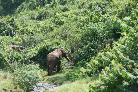 Sandai Homestay & Cottages: Eléphant