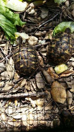 Centre de Reproduccion de Tortugas del Albera