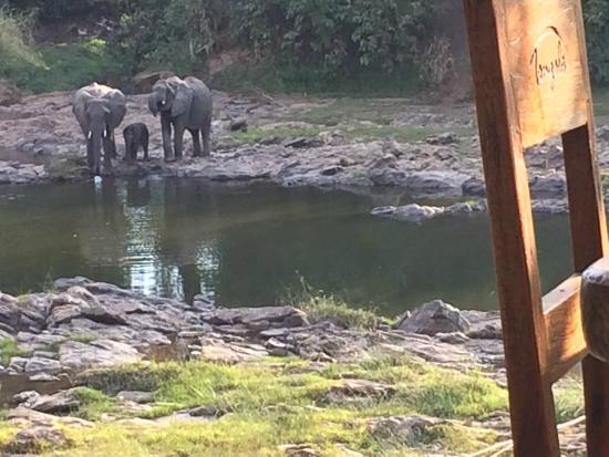 Tongole Wilderness Lodge: Elephant family at the river.