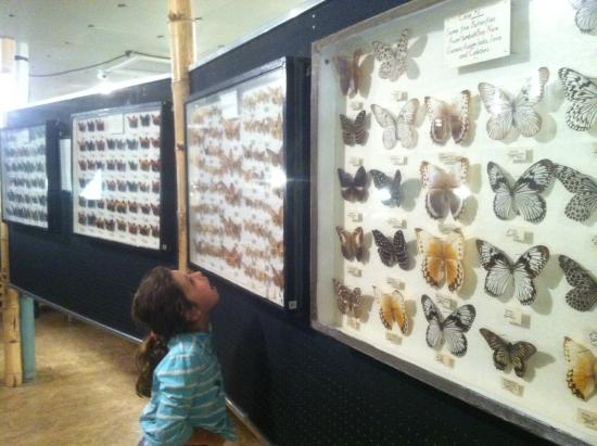 May Natural History Museum of the Tropics