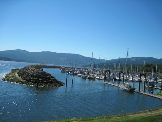 Sequim, WA: View of the marina from the park beside it.