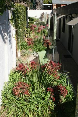 Sandton Slippers B&B: Winter Garden