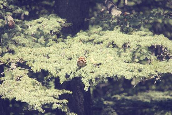 Tannourine Cedar Forest Nature Reserve: The beautiful nature!