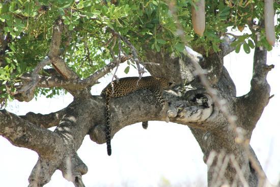 Mdonya Old River Camp: Wildlife
