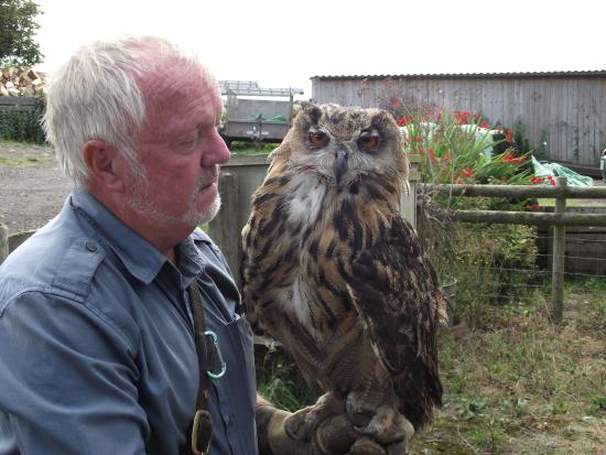 South Wales, UK: owl