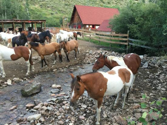 Drowsy Water Ranch: A few of the 120 horses at DWR.