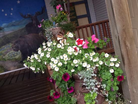 Alaska Art Colony: Even the flowers are artsy