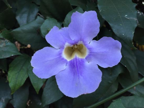 Pousada das Flores: photo1.jpg