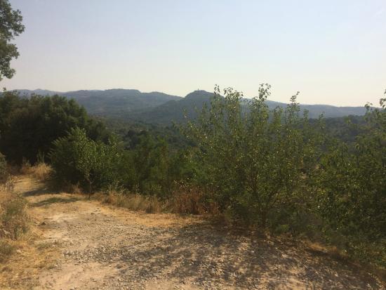 Castello di Potentino: Views of the Castle vineyard