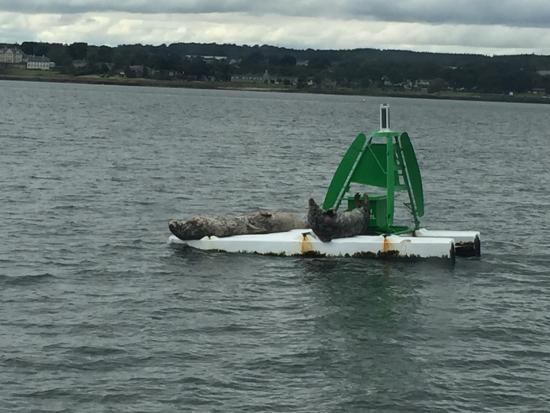 Maid of the Forth: We got very close to the seals today, returning from Inchcolm Island on the Maid of Forth.
