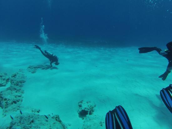 Opal's Dream: cozumel reefs relaxing