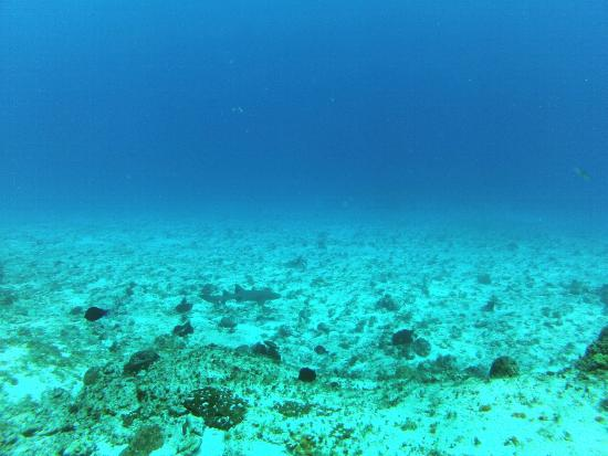 Opal's Dream: Tiburon