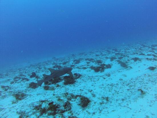 Opal's Dream: shark