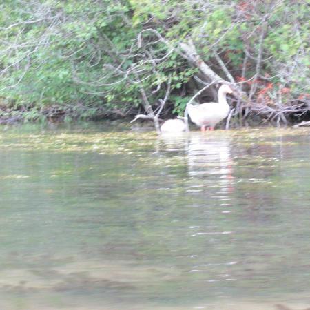 "Egg Harbor, Ουισκόνσιν: ""Wildlife"" seen"