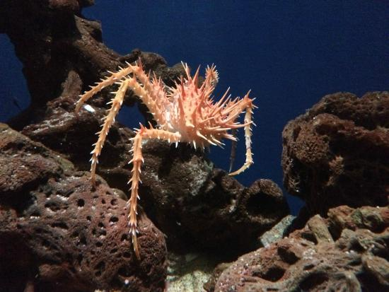 Crab Photo De Aquarium Of The Pacific Long Beach