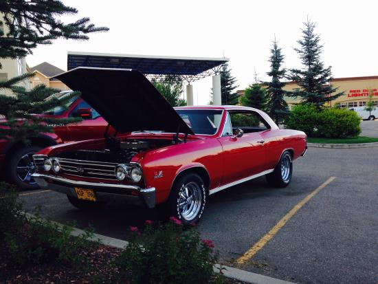 Motel 6 Red Deer : Chevelle cooling down at Motel after the parade