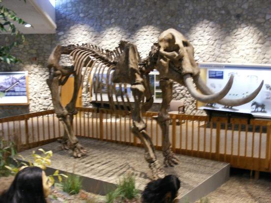 Imperial, MO: Mastodon
