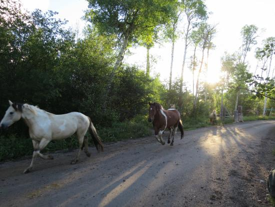 写真R Lazy S Ranch枚