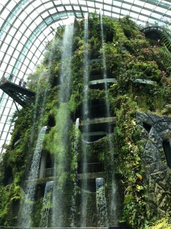 gardens by the bay tallest indoor man made waterfall in the world found - Garden By The Bay Entrance Fee