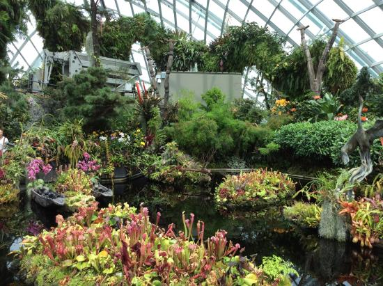 gardens by the bay flower dome and cloud forest have entrance fees the other