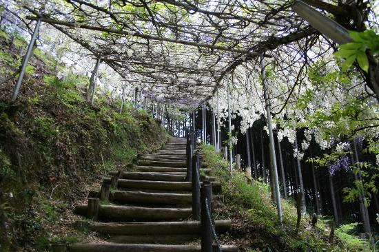 Miyama no Sato Shinrin Park