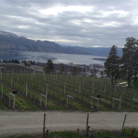 West Kelowna, Canadá: Beauty at the winery