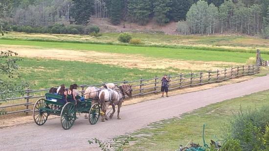 A-P Ranch: wedding carriage