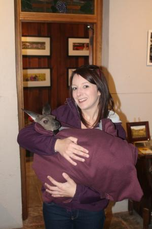 Barossa House: A little visitor in one of the bars