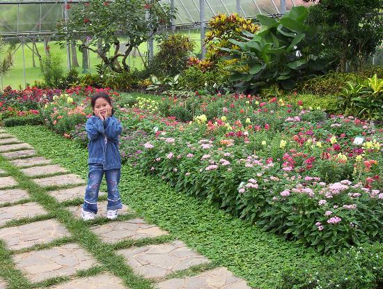 Cianjur, Indonesia: Koleksi bunga di Rumah Kaca