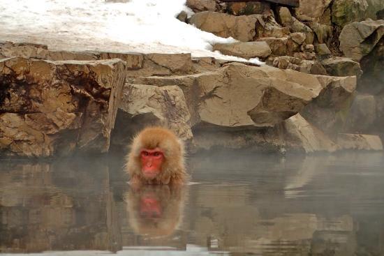 Яманучи-мати, Япония: Jigokudani Snow Monkey Park