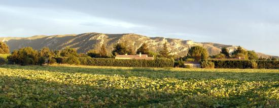 Sous L'olivier: Le Luberon, mountain range just behind the Hotel