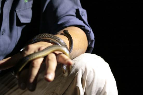 Arenal Oasis Wildlife Refuge: gelukkig niet giftig