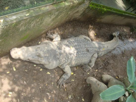 Crocodile and Reptile Indonesia Jaya Park