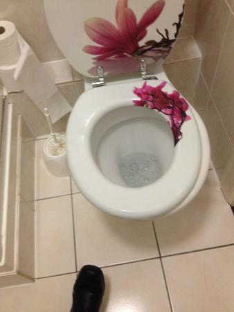 Granville Guest House: toilet seat didnt fit