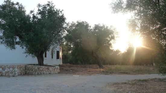 Veglie, Italië: Agriturismo e ulivi
