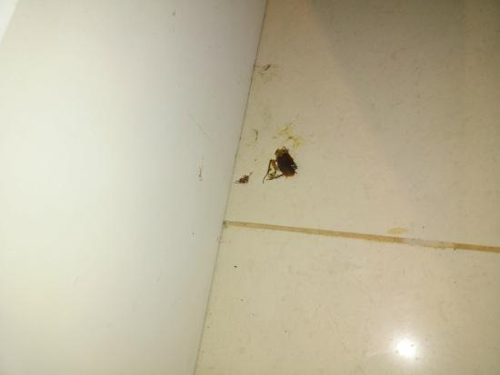 Domina Zagarella Sicily : Cockroach 1