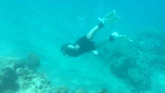 Shulamit's Eilat Diving Adventures: snorkelling but you can still get close to the fish