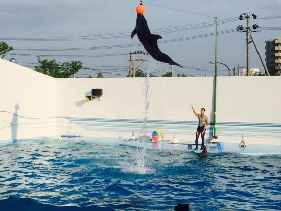 Joetsu Municipal Aquarium照片