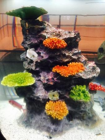 Joetsu Municipal Aquarium: 夏のイルカショーは必見!