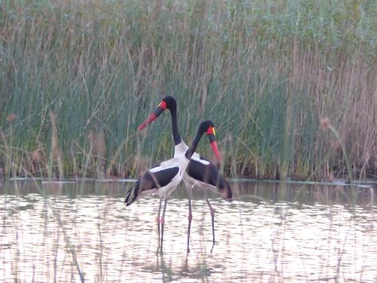 Kwalucia Private Safari Retreat: iSimangaliso-wetland-park
