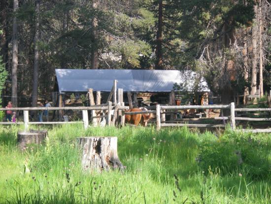 Muir Trail Ranch: the ranch